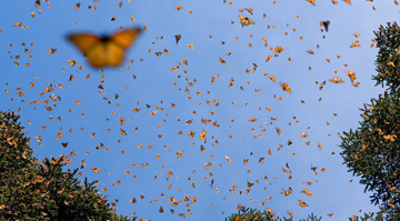 Kể về Con bướm cuối cùng