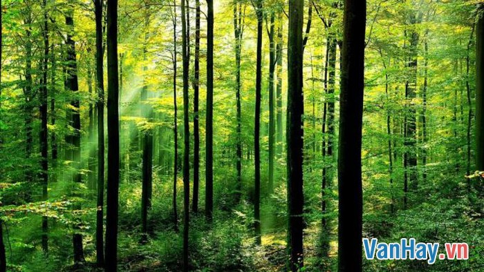 Nhớ rừng 2
