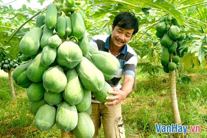 Người nông dân Việt Nam