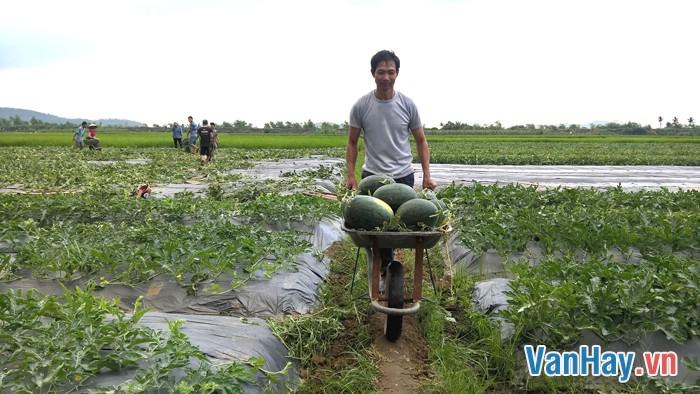 Người nông dân